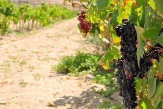 winelist-kontos